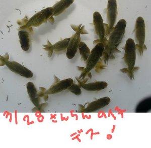 Shiro0620z