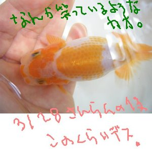 Shiro0726ta