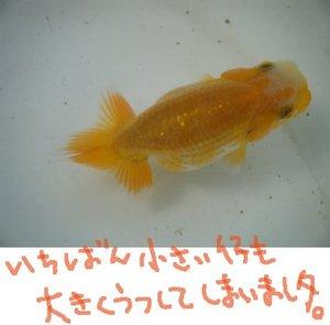 Daruma0428sa