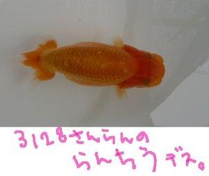Shiro0828aa