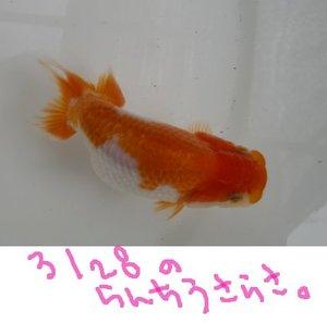 Shiro0828sa