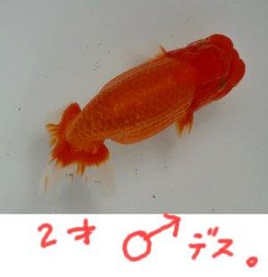 09302sai
