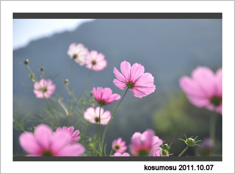Kosumo_2