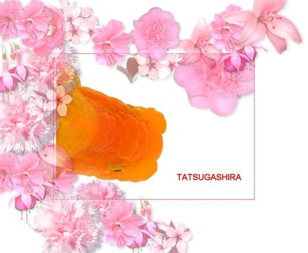 Tatsu2_2