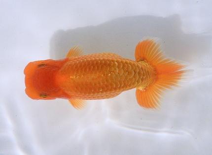 Bokayama2