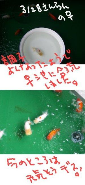 Shiro0610