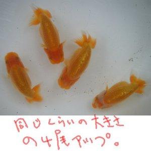 Shiro0806a4_2