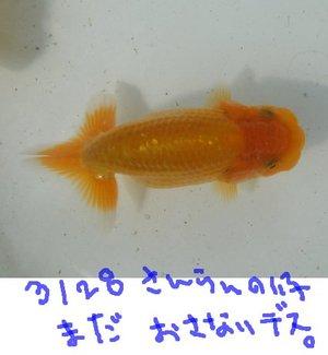 Shiro0812aka