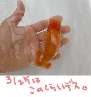 Aka0911ta